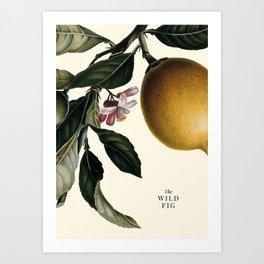 The wild fig Art Print