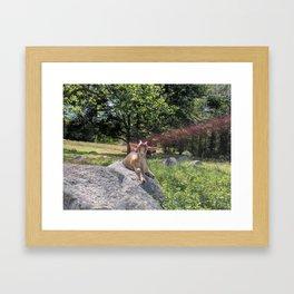 Sunshine and Goats Framed Art Print