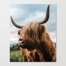 Scottish Highland Cattle - Animal Photography Canvas Print
