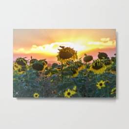 Sunflower Portrait Metal Print