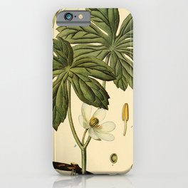 Vintage Print - Birds and Nature (1900) - Mandrake iPhone Case