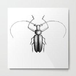 Beetle hand-drawn in the style of vintage etchings Metal Print