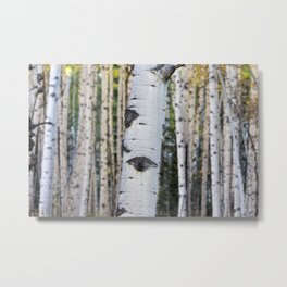 Forested Metal Print