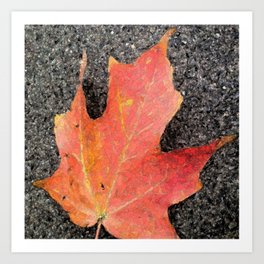 Water color of a sugar maple leaf Art Print