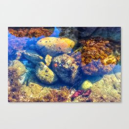 The Tide Pool Canvas Print
