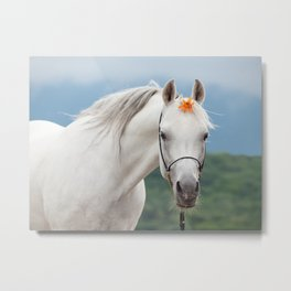 white arabian horse Metal Print