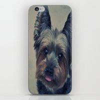 yorkie iPhone & iPod Skins featuring yorkie by michaelchon