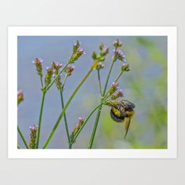 Industrious Bee Art Print