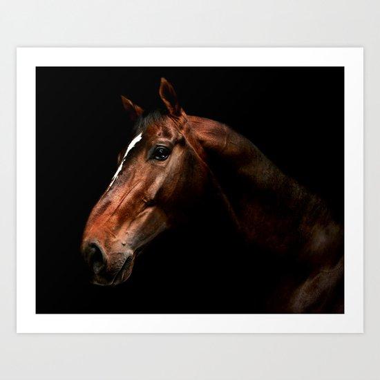 stallion portrait Art Print
