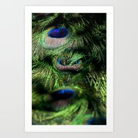 Peacock Tail Feathers #001 Art Print