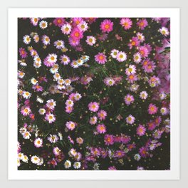 Pink Marguerite Art Print