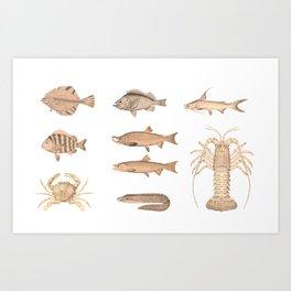 Vintage Assorted Fish Art Print