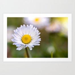 Colourful daisy flower Art Print