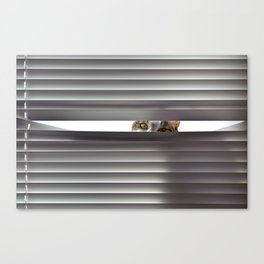 Curious cat looking through blinds Canvas Print