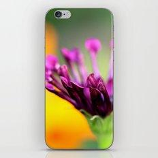 orange & purple iPhone & iPod Skin