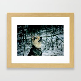 Dog In The Forest Framed Art Print