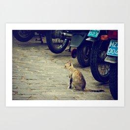 cat in cuba Art Print