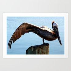 Pelican Wing Art Print