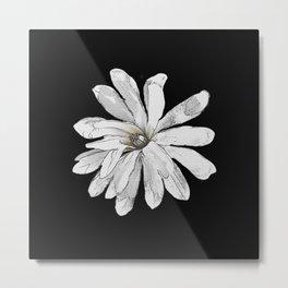 Star magnolia, flower Metal Print