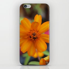 Zinnia Starbright iPhone Skin