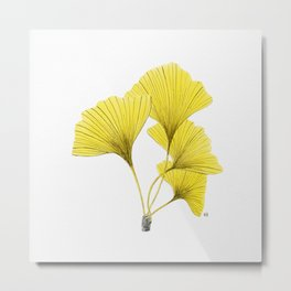 Fall yellow ginkgo biloba Metal Print