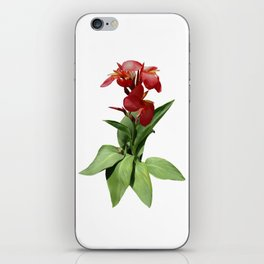 Red Canna Lily iPhone Skin