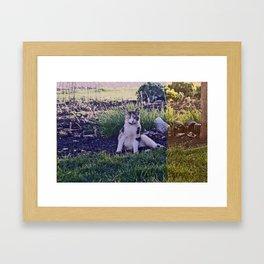 Country Kitty Framed Art Print