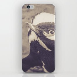 Adorable African Penguin Series 4 of 4 iPhone Skin
