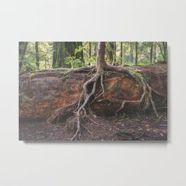 Jedediah Smith State Park - Forest Tree Metal Print