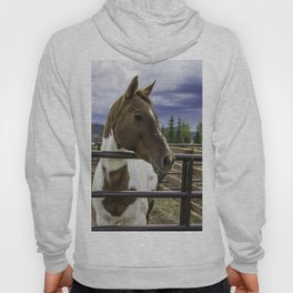 Beautiful Horse with Brown and White Patches Watching a Storm Coming in Hoody