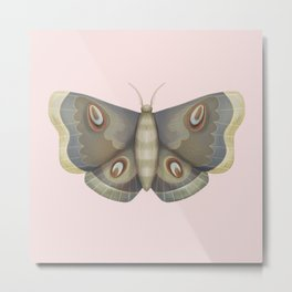 papillon de nuit Metal Print