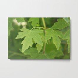 Amber Orientalis Leaves Metal Print