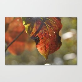 autumn red leaf Canvas Print