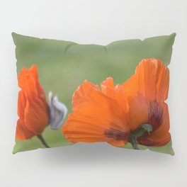 PRETTY POPPIES IN THE LATE AFTERNOON SPRING SUNSHINE Pillow Sham