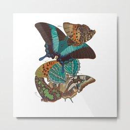 Papillons or Butterflies Metal Print