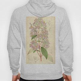 Monochaetum dicranantherum 91 5506 Hoody