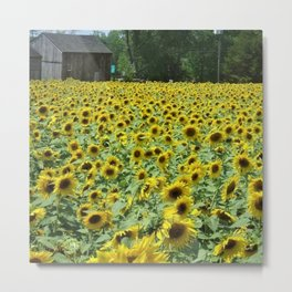 A landscape of beautiful sunflowers by Jéanpaul Ferro Metal Print