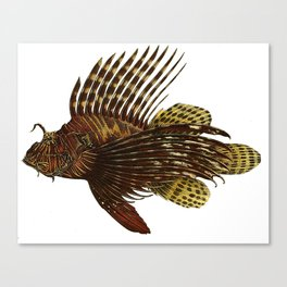 Red Lionfish Canvas Print