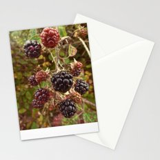 Autumn's Bounty Stationery Cards