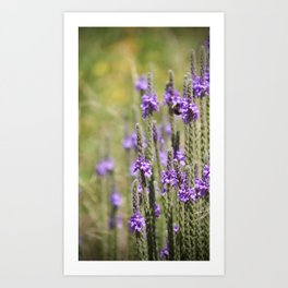 wildflowers 01 Art Print