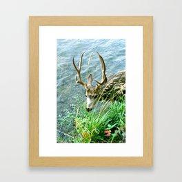 Summer Buck Framed Art Print