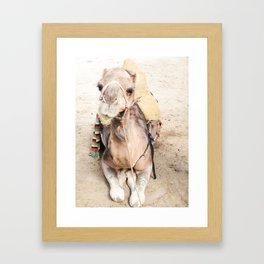 Happy Camel Framed Art Print