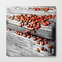 When the Ladybugs were Everywhere Metal Print