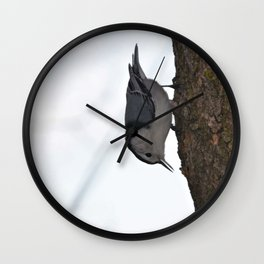 What a Nut-Hacth Wall Clock