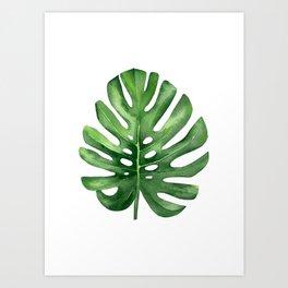 Tropical Leaf, Monstera leaf. Art Print