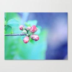 Hello Sweet Spring  Canvas Print