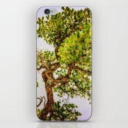 Curly Pine iPhone Skin