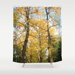 Ginkgo biloba trees Shower Curtain