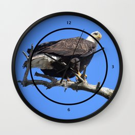 Alaskan Bald Eagle - Perched on tree limb Wall Clock