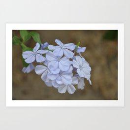Blue Flowers Fine Art Photography Art Print